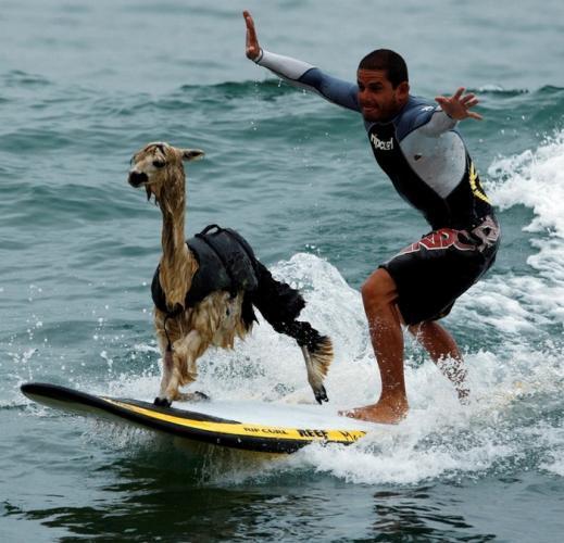 Que tal surfar com seu bichinho?