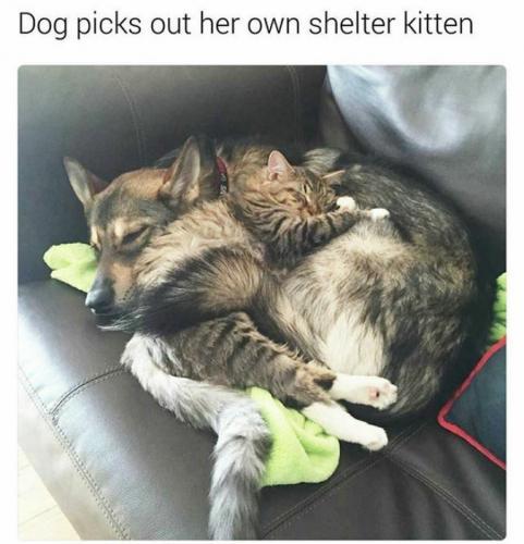 Nosso cão quem escolheu seu companheiro no abrigo. Adotamos...