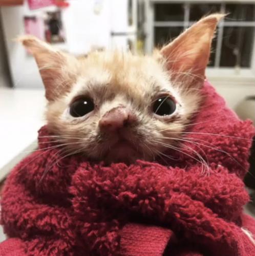 Uma gatinha especial