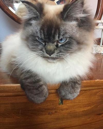 A nova estrela dos gatos!
