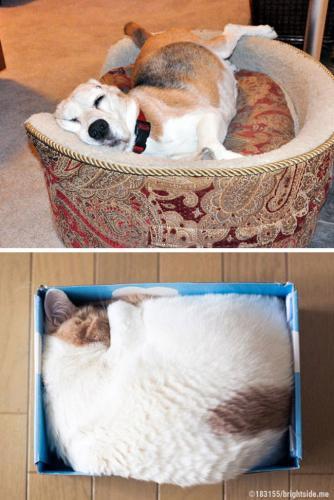 1. A escolha do lugar mais aconchegante para dormir...