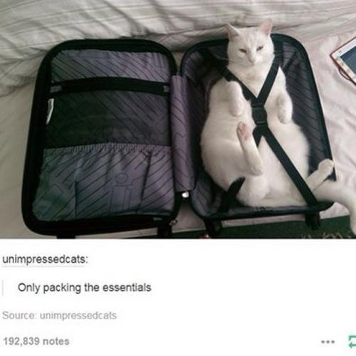 Bagagem de um dono de gato para as férias