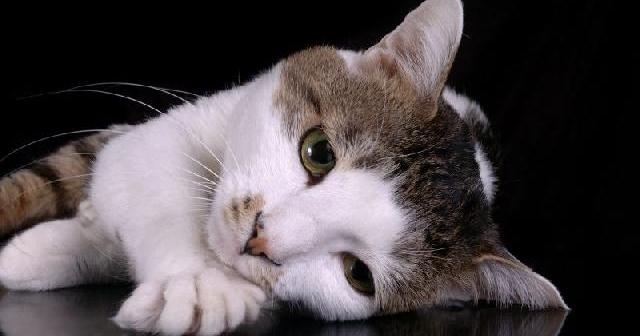 Coisas proibidas de se dizer a quem tem gato