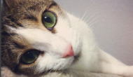 Mulher abraça e acolhe gato que ninguém queria tocar, e eis que algo lindo acontece...