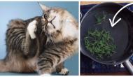 7 dicas para fazer fotos lindas de gatos