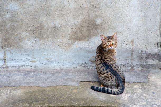 Quando os gatos colam suas cabeças na parede ...