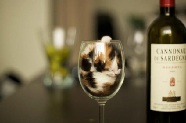 O vidro, o lugar favorito dos gatos