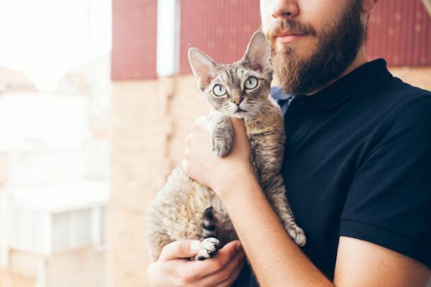Como pego ou carrego meu gato?