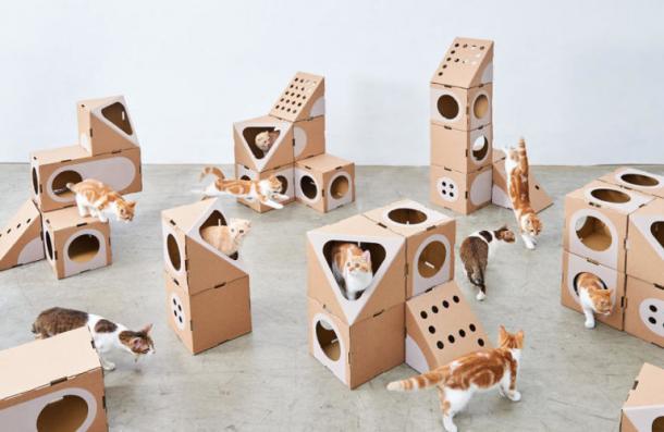 Cidade dos Gatos, todinha de papelão