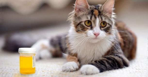 Comportamento de cães e gatos