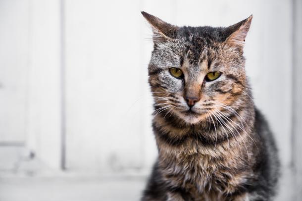 Cuidando de gatos idosos