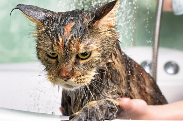 Hora de tomar banho !