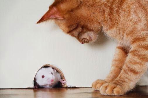 Desafio: Sabendo-se que 3 gatos pegam 3 ratos em 3 minutos, quanto tempo levam 100 gatos para pegar 100 ratos?