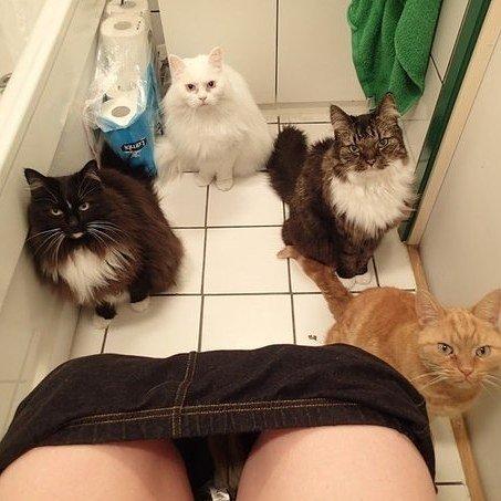 Você não saberá nunca mais o que é ir ao banheiro sozinho.