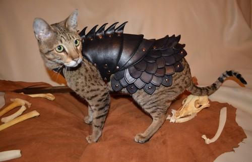"""Cat Battle Armor"" (Armadura de batalha para gato)"