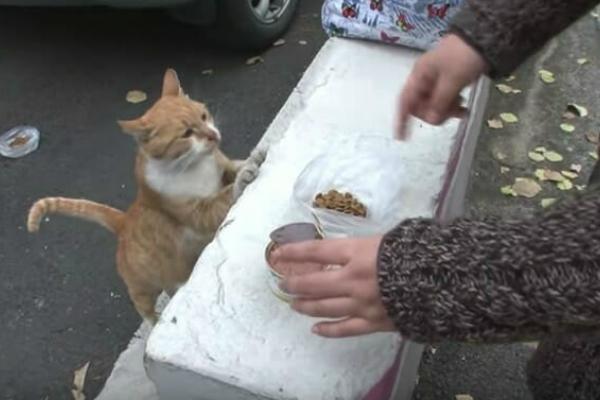 Alimentando gatinhos