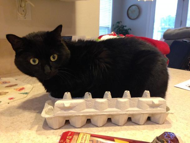 """Não, claro que não estou desconfortável, gosto da forma desta caixa"""""""