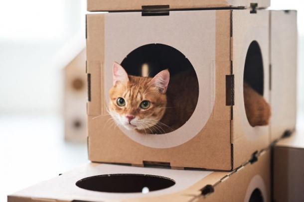 1. Cidade dos gatos