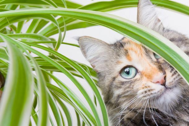 Gatos X Plantas