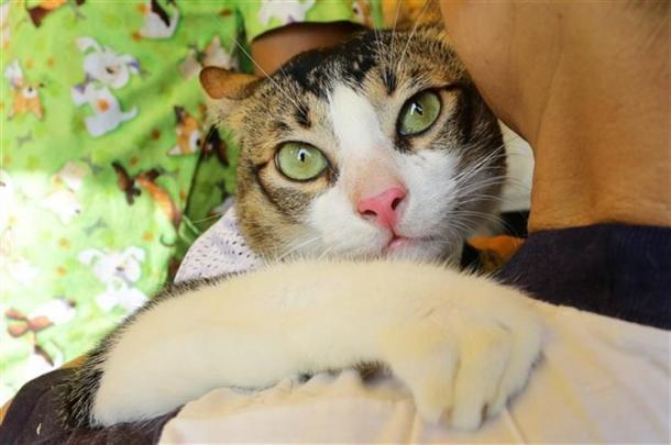 Terceiro estudo a comprovar relação entre gatos e esquizofrênicos.