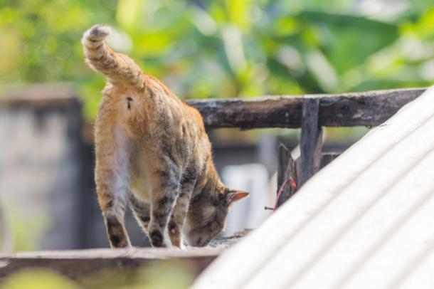 Cumprimentos estranhos de gato