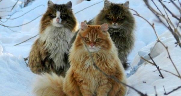 """<span style=""""font-family: Montserrat, sans-serif;"""">O poder esotérico dos gatos :)</span>"""