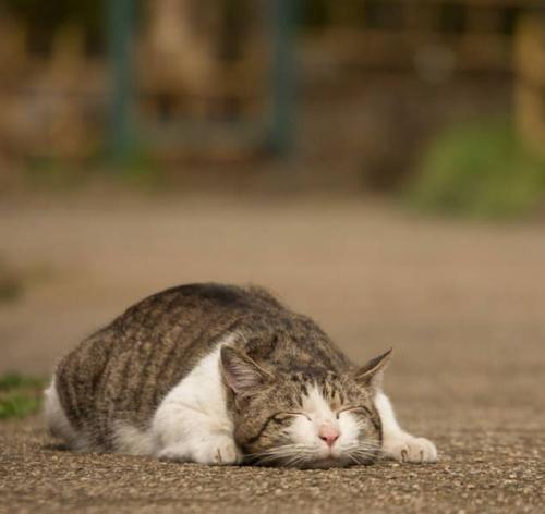 Gatos de Tokyo