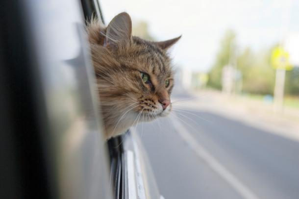 Nós estamos saindo, bichano!