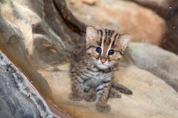 Um pequeno gato de pescador!
