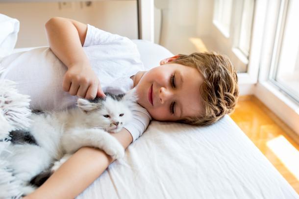 Gatos promovem respeito e respeito pelos outros