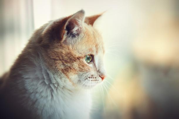 Idade do gato