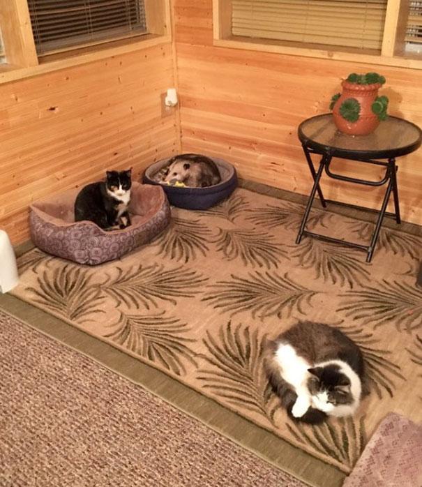 Os três 'gatinhos' da vovó