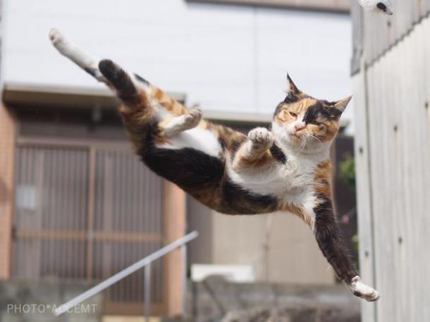 1. Todo gato tem um ninja dentro de si