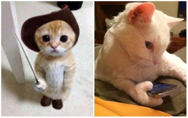 As poses humanas dos gatos
