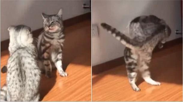 Luta de gato !