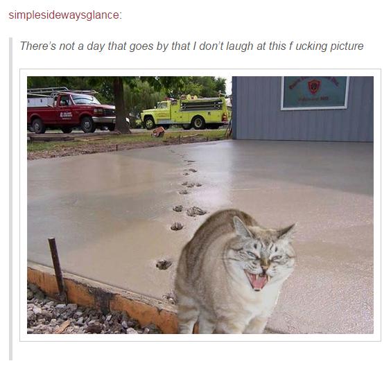 1 - Ok, precisamos falar sobre gatos.