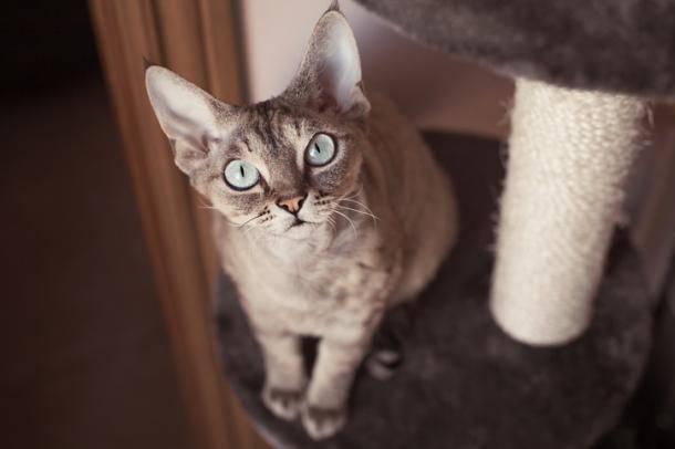 Gatos mal-humorados