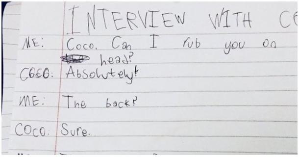 Uma entrevista de gato