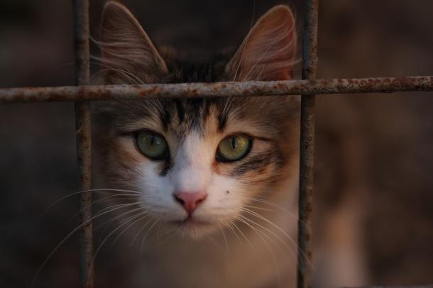 Evite um comportamento indesejado do seu gato sem agredi-lo