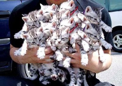 01. Coletivo de gatos