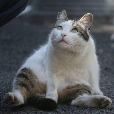 1 .Gatos de Tokyo