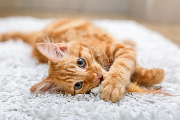 Donos de gato, tenham cuidado!