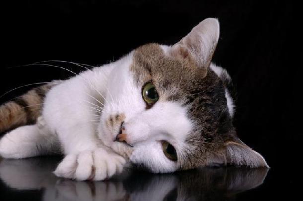 """""""Como você pode deixar seu gato subir em cima da mesa?"""""""