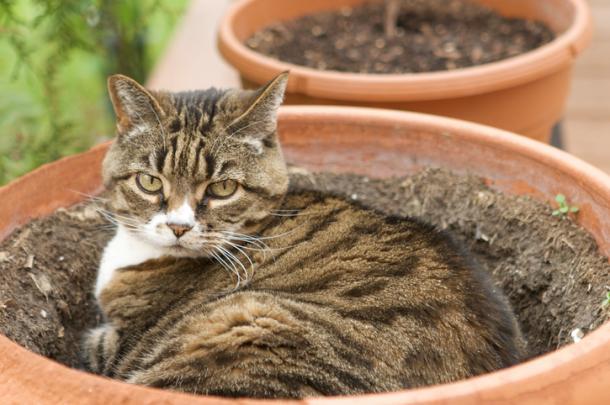 Plantas e Gatos: Missão Impossível