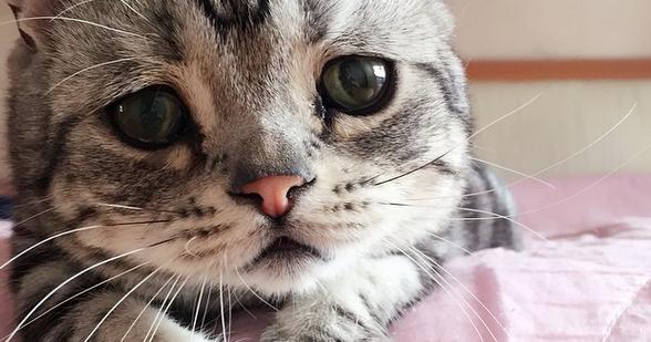 Como agir quando seu gato vomita