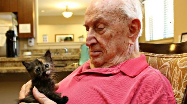 Projeto une idosos com alzheimer a gatinhos órfãos e o resultado você confere aqui