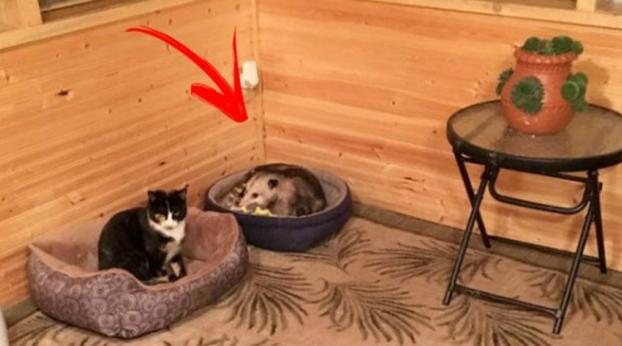 Uma Vovó cuida de três gatinhos abandonados como se fossem filhos...até que seu neto percebe que ...
