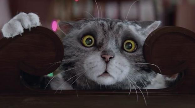 Gatos Protagonistas - filmes publicitários sobre o Natal dos gatos fazem muito sucesso na internet