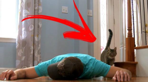 Dono finge estar morrendo para testar reação de sua gata