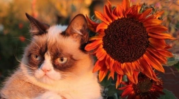 GRUMPY CAT: conheça a gatinha mais zangada da web